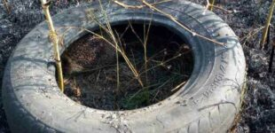 На Днепропетровщине чрезвычайники спасли ёжика
