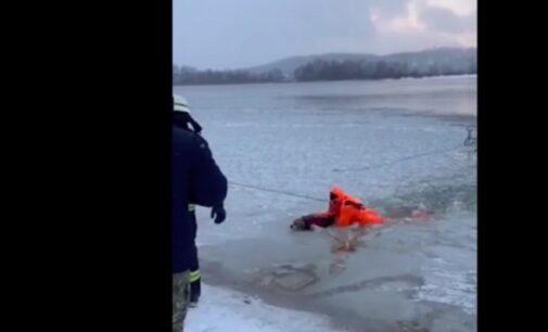 В Киеве спасли собаку, который провалился под лед: видео
