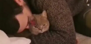 Кот остался холоден от хозяйских объятий