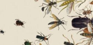 Ученые случайно открыли новый вид насекомых с помощью Твиттера