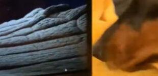 «Хватит с тебя интернета!»: доберман возмутил хозяйку, захлопнув ее ноутбук