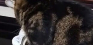 «Не нужен мне этот суп!»: кошка села в кастрюлю, чтобы хозяйка сделала новое блюдо