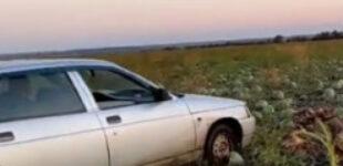 """По арбузам на машине: в сети """"завирусилось"""" новое видео"""